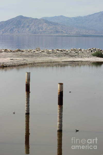 Photograph - Ducks And Mountains At North Shore Salton Sea by Colleen Cornelius