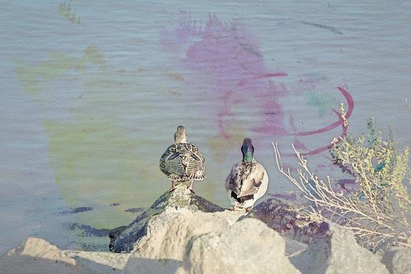Digital Art - Ducks From Behind Watercolor by Alison Frank