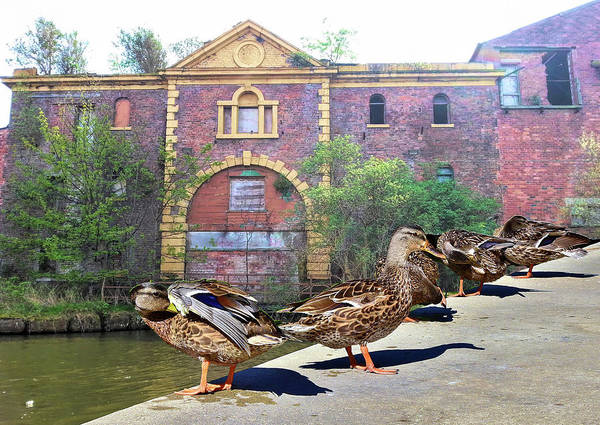 Victorian House Digital Art - Ducks In A Row In Front Of The Old Mansion by Linda Brody