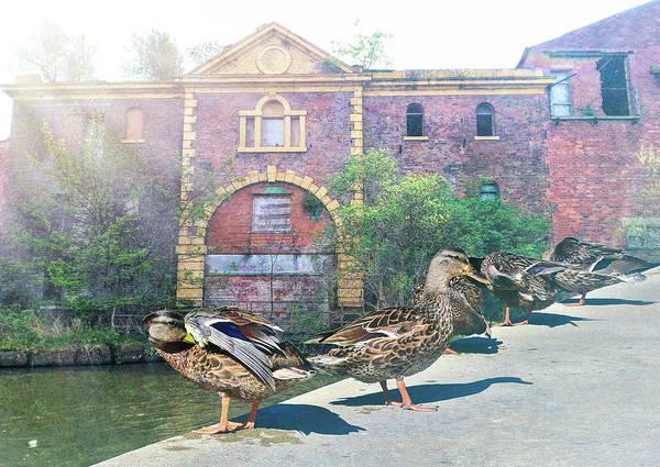 Victorian House Digital Art - Ducks In A Row With Fog Breaking Through by Linda Brody