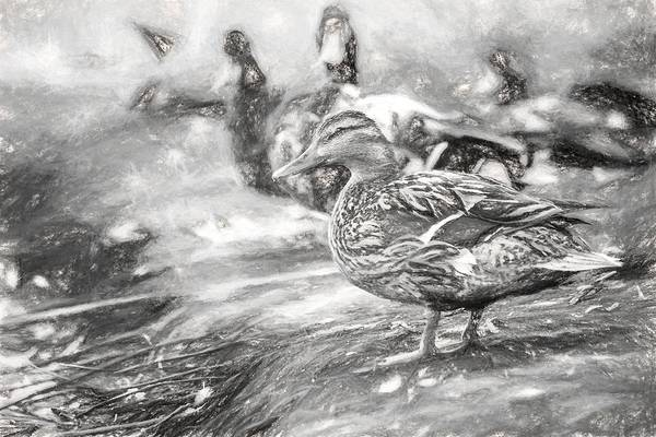 Photograph - Ducks On Shore Charcoal by Don Northup