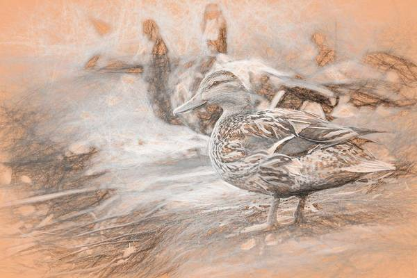 Ducks On Shore Da Vinci Art Print