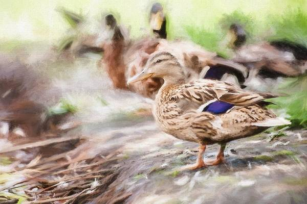 Photograph - Ducks On Shore Painting by Don Northup