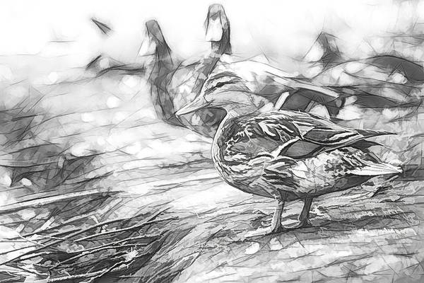 Photograph - Ducks On Shore Sketch by Don Northup