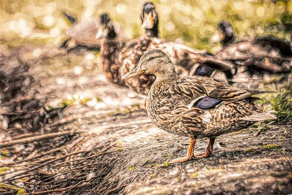 Photograph - Ducks On Shore Toned by Don Northup