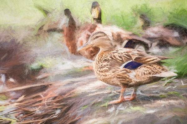 Photograph - Ducks On Shore Turner by Don Northup