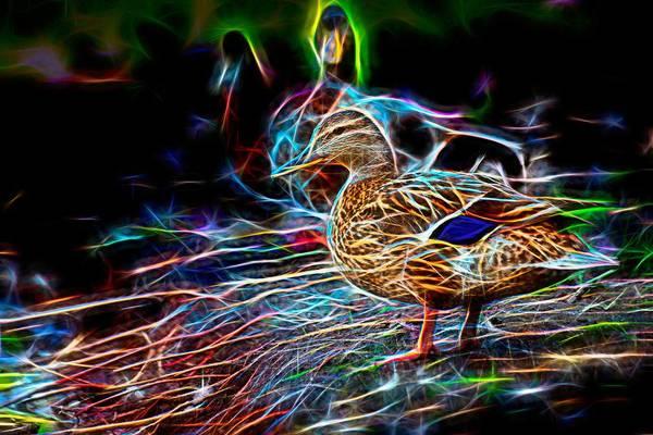 Ducks On Shore Wizard Art Print