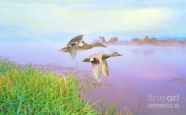 Wall Art - Photograph - Ducks On The Move by Laura D Young