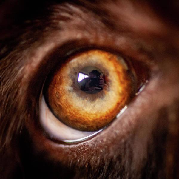 Photograph - Duke Eye by Jeff Phillippi