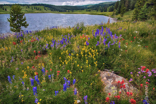 Wall Art - Photograph -  Dumont Lake Colorful Flowers by Dave Dilli