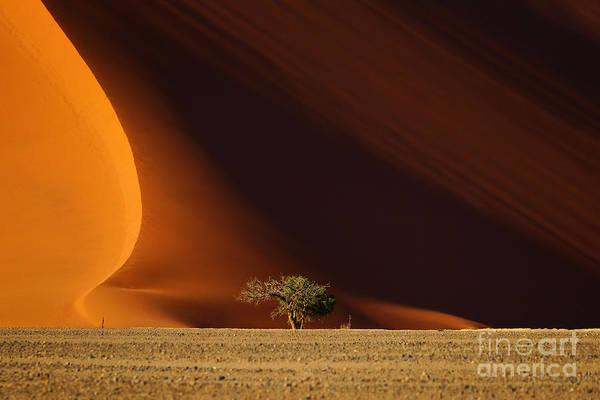 Dune 40 And Tree, Sossusvlei, Namib Art Print