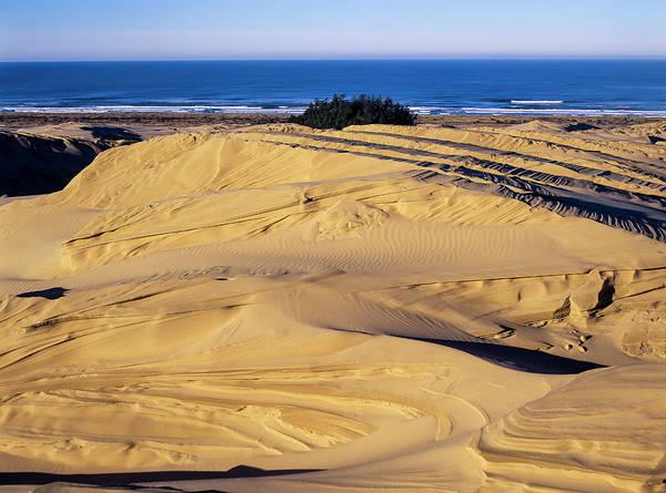 Photograph - Dune Erosion by Robert Potts