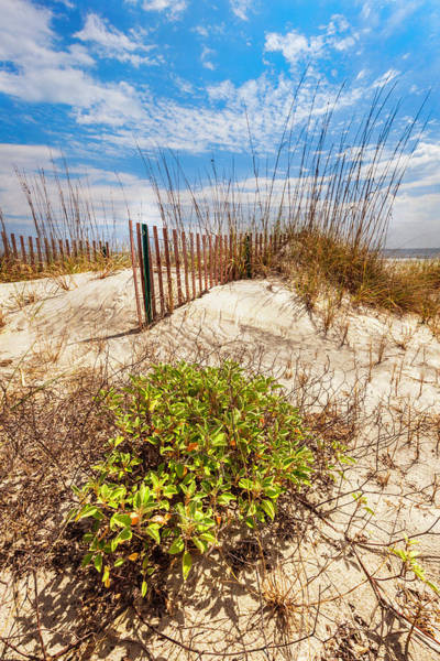 Photograph - Dune Fences In The Sand by Debra and Dave Vanderlaan