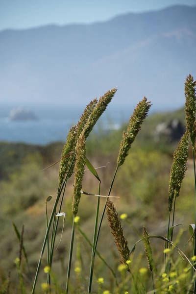 Photograph - Dune Grass by Marie Leslie
