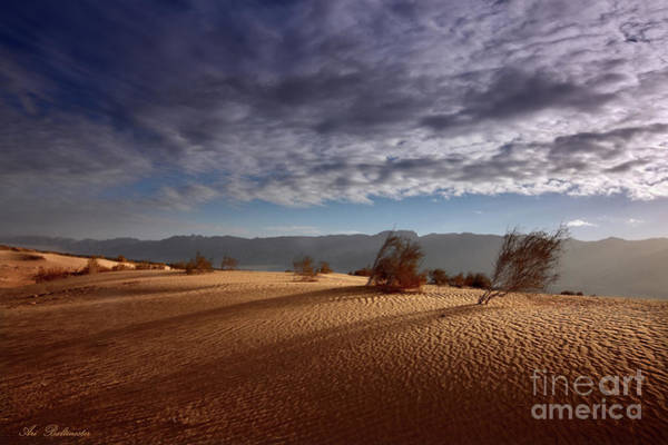 Photograph - Dune In Motion by Arik Baltinester