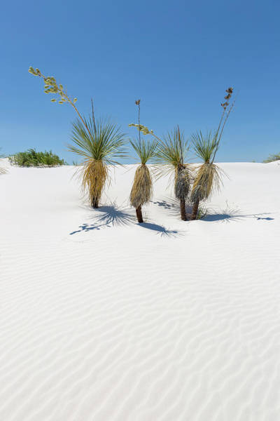 Wall Art - Photograph - Dunes And Yucca, White Sands National Monument  by Melanie Viola