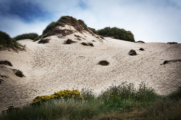 Photograph - Dunes In Cornwall by David Resnikoff