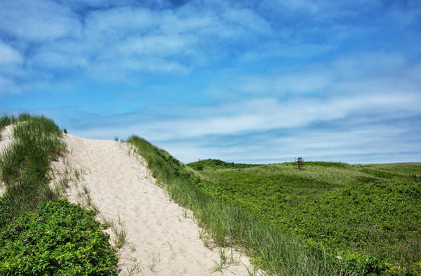 Wall Art - Photograph - Dunes On Martha's Vineyard by Brendan Reals