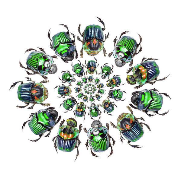 Wall Art - Photograph - Dung Beetle In Circular Pattern Design by Darrell Gulin