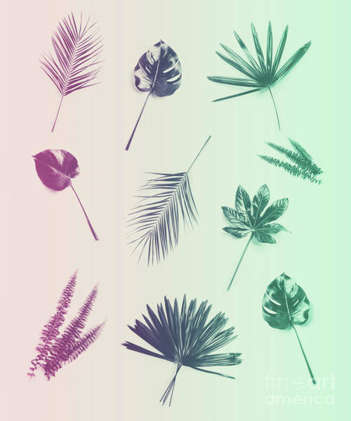 Photograph - Duotone Background Of Tropical Plants And Leaves. by Michal Bednarek