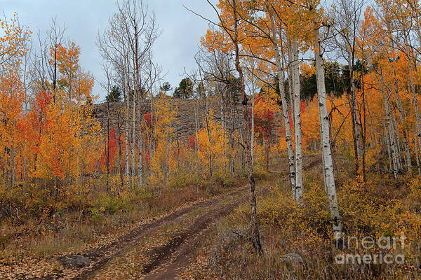 Photograph - Dusky Road by Jim Garrison