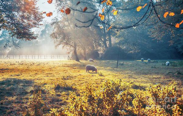 Photograph - Dutch Ecological Farm by Ariadna De Raadt