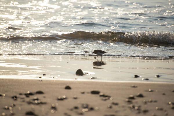 Photograph - Duxbury Beach Sandpiper At Sunrise Duxbury Ma by Toby McGuire