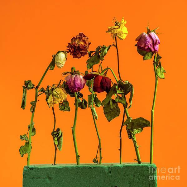 Wall Art - Photograph - Dying Flowers Against A Orange Background by Bernard Jaubert
