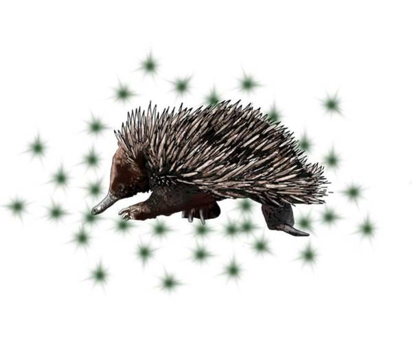 Drawing - E Is For Echidna by Joan Stratton