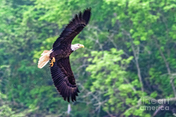 Wall Art - Photograph - Eagle 2871t by Doug Berry