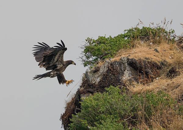 Photograph - Eagle Cliffside Landing by Loree Johnson