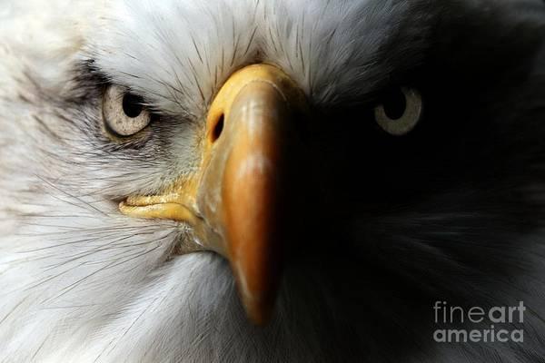Beak Wall Art - Photograph - Eagle Close Up Portrait by Ismael Jorda