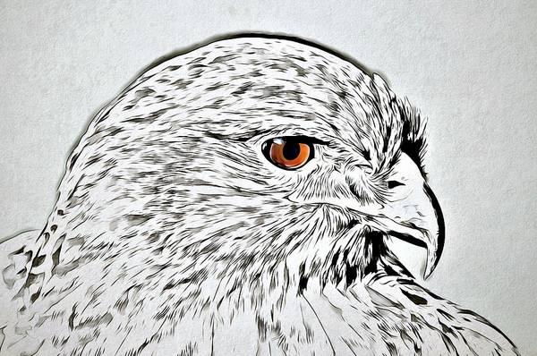 Eagle Drawing - Eagle Eye by ArtMarketJapan