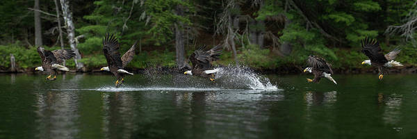 Photograph - Eagle Fishing by Dale J Martin