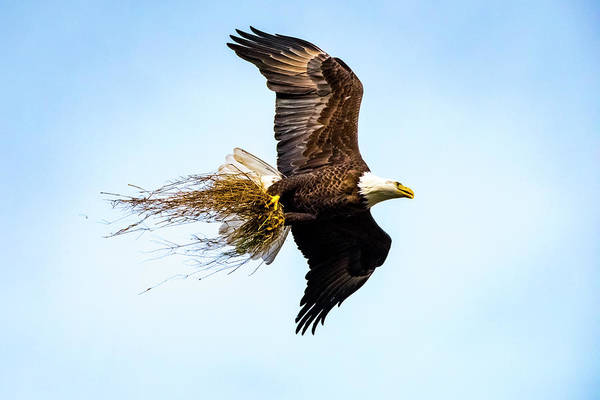 Photograph - Eagle Home Improvement by David Morefield