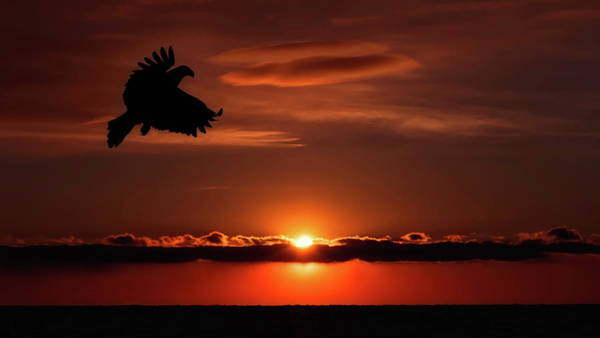 Photograph - Eagle In A Red Sky by Scott Bourne