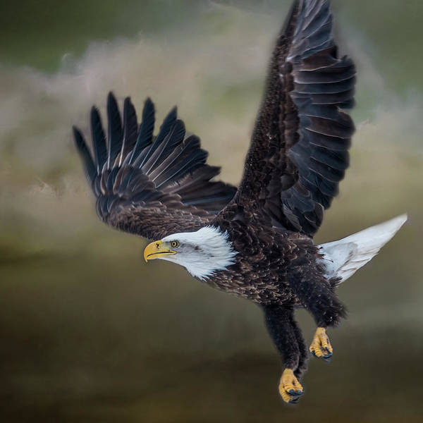 Wall Art - Photograph - Eagle In Clouds by Paul Freidlund