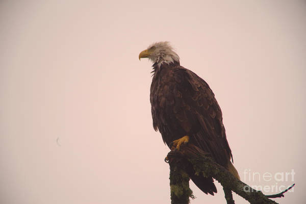Wall Art - Photograph - Eagle In The Rain  by Jeff Swan