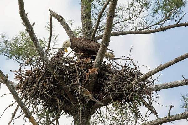 Photograph - Eagle Nest by Doug McPherson