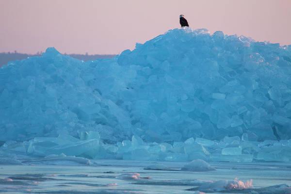 Photograph - Eagle On Ice Mackinaw City 2261803 by Rick Veldman