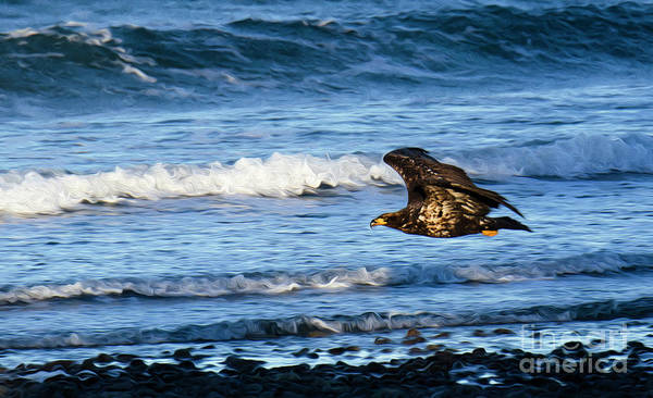 Wall Art - Photograph - Eagle On The Hunt by Bob Christopher