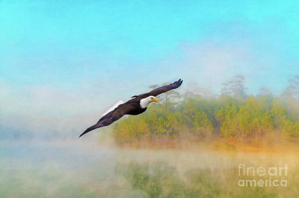 Flying Eagle Photograph - Eagle Out Of The Mist by Laura D Young