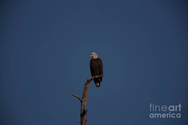 Wall Art - Photograph - Eagle Overlooking The Land Of The Free by Jeff Swan