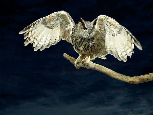 Body Parts Photograph - Eagle Owl Spreading His Wings by Michael Blann