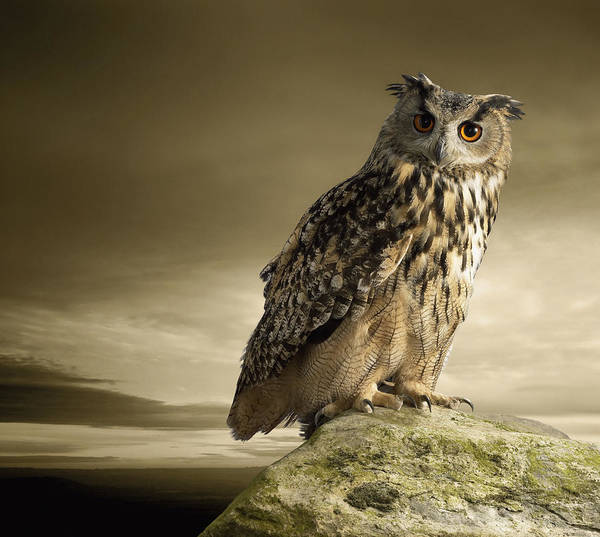 Eagle Owl Standing Full Length On A Rock Art Print