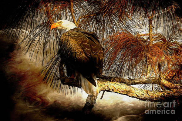 Wall Art - Photograph - Eagle Painterly by Deborah Benoit