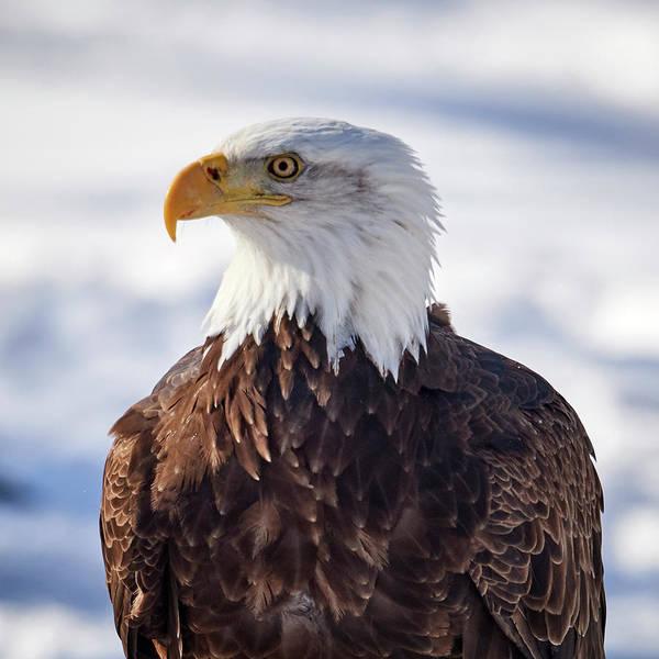 Wall Art - Photograph - Eagle Portrait by Paul Freidlund