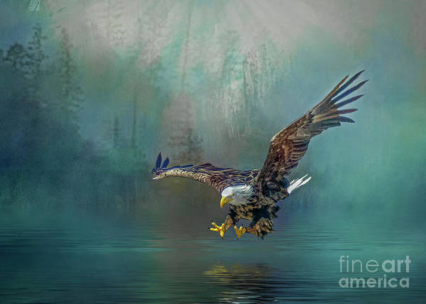 Photograph - Eagle Swooping For Fish by Brian Tarr