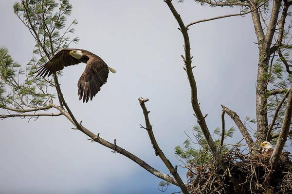 Photograph - Eagle's Nest by Doug McPherson