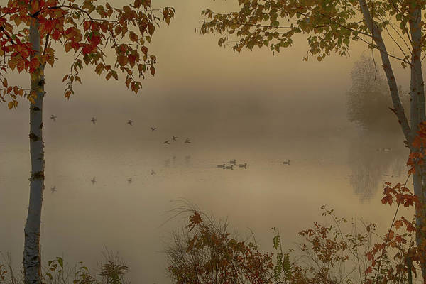 Photograph - Early Arrivals Rangeley Maine by Jeff Folger